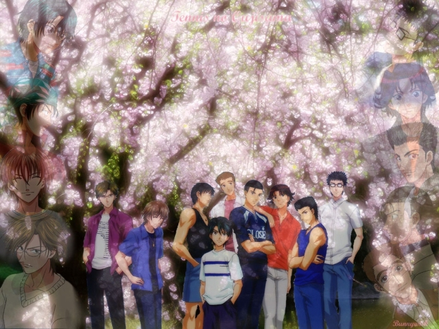 prince of tennis seigaku tennis club sakura